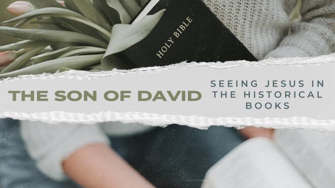 Women's Bible Study - The Son of David